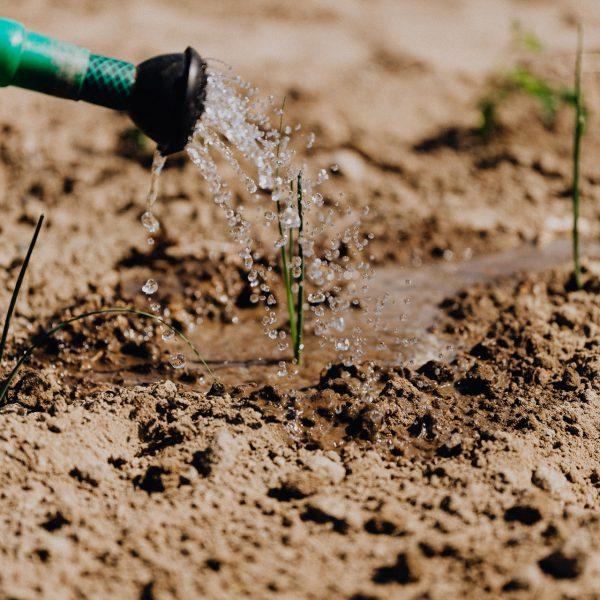 watering plant training
